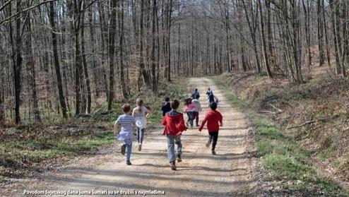 Šume i energija