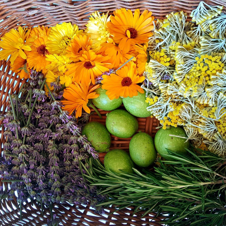 Izrada prirodne biljne kozmetike