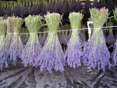 Sačuvajte snagu prirode ljekovitog bilja