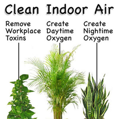 Kako prirodno pročišćavati zrak u zatvorenim prostorima