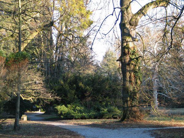 Upute za sadnju stabala