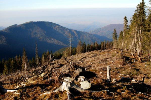 Što je deforestacija