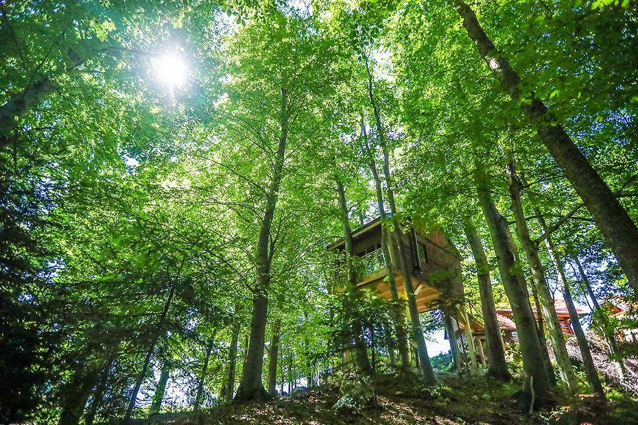 Kućica na stablu