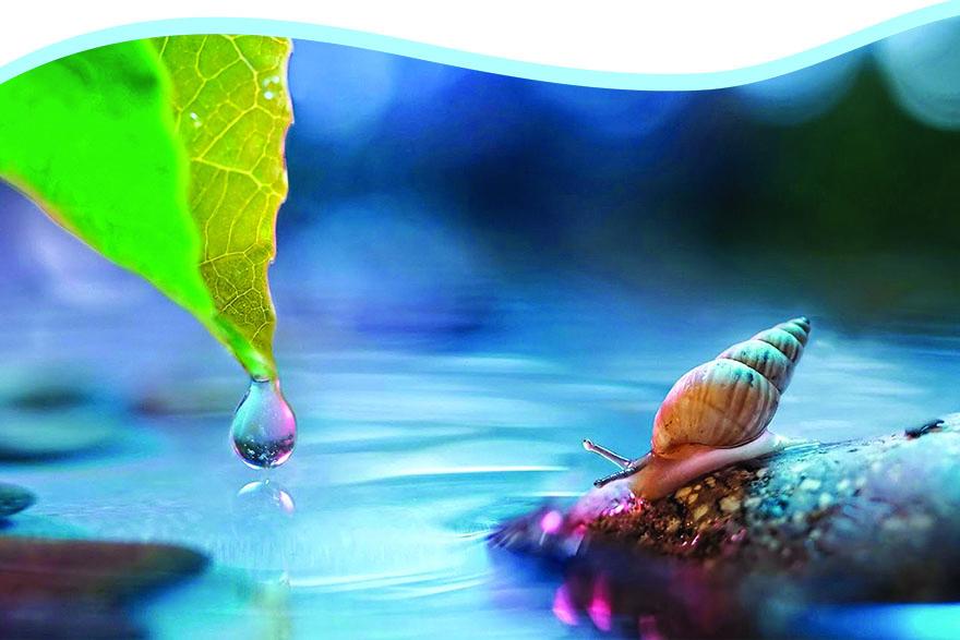 Voda – osjetljiva ravnoteža prirode