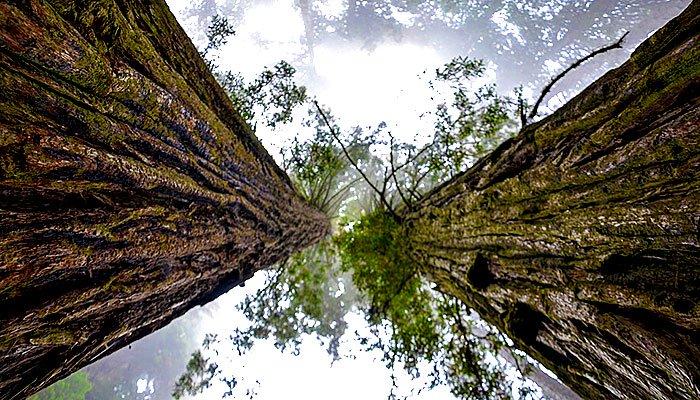Drvo daje energiju