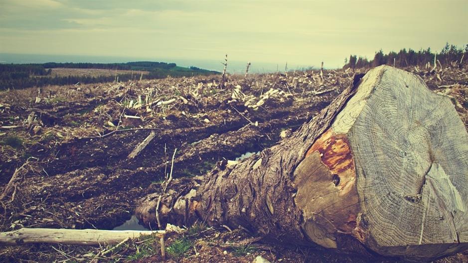 Zastrašujuće brojke gubitka svjetskog šumskog pokrova