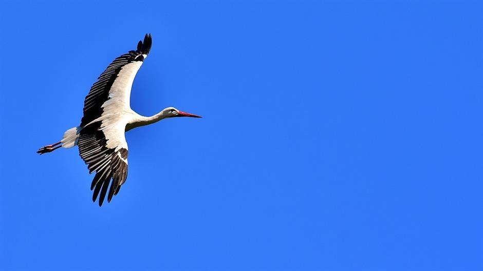 Ptice promijenile raspored selidbi zbog klimatskih promjena