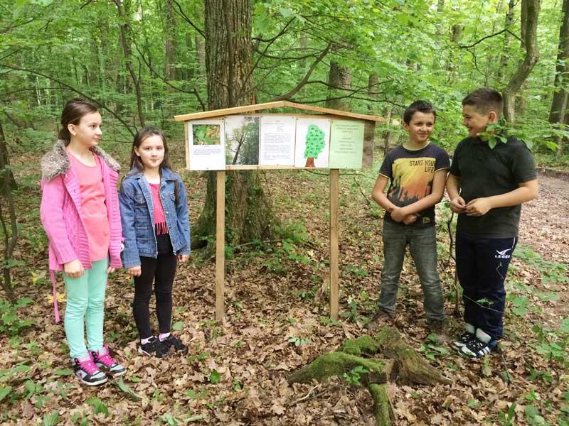 Škola u šumi