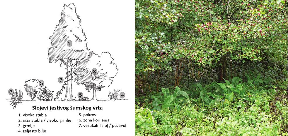 Radionice dizajniranja i sadnje šumskog vrta