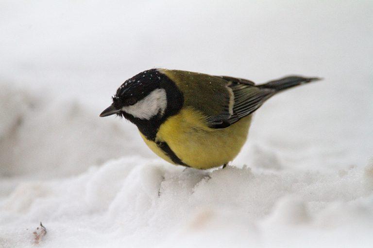 Hranimo ptice zimi