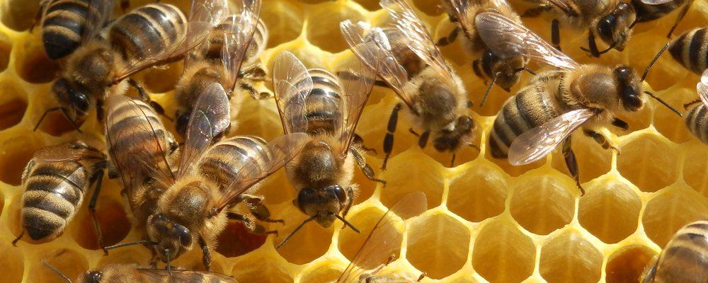 Pčele i med